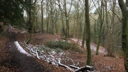 Woodland trail #REDBED day 10